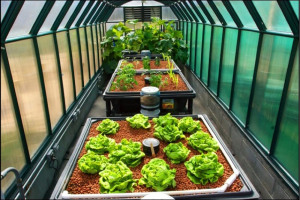 aquaponics-usa-greenhouse-full-shot-1.jpg - Create a Suburban Farm for Tolworth