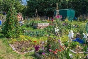 Alive's Dementia Friendly Allotment