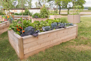 raised-garden-bed.jpg - Holme Valley Pots of Fun Project