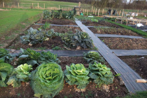 allotment-photo.jpg - Allotments for the Humber Centre, Hull