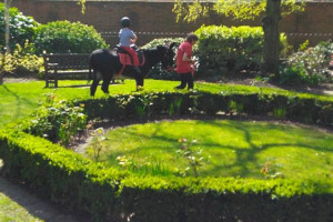 donkey.jpg - St Andrews Gardens a Space for Everyone