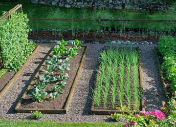 vegetable-gardening-dh.jpg