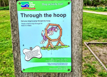 through-the-hoop.jpg