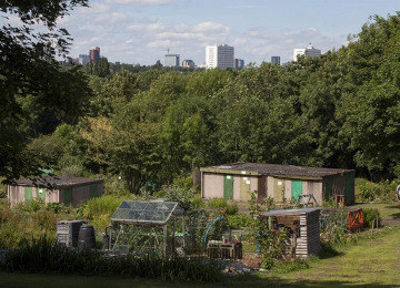 allotments-2.jpg