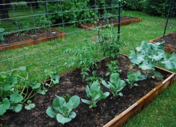 communitygarden-2.jpg