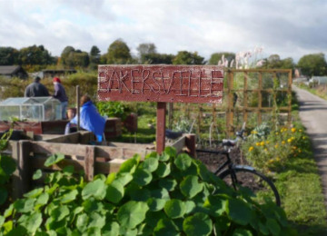 bakersvill-allotment.jpg
