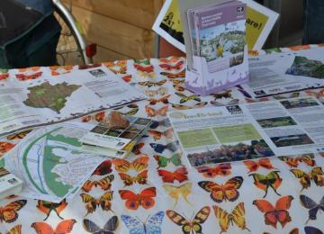 awt-butterflies.jpg