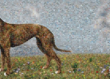 Greyhound_Final_AW_A4_SMALL.jpg