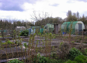 allotments-6-email.jpg