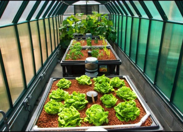 aquaponics-usa-greenhouse-full-shot-1.jpg