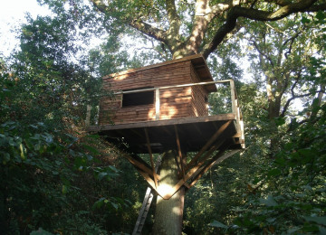 the tree hide - gives a wonderful view of the woodland canopy and the Gilbert White Clearing, where we may erect a Swift Tower.jpg