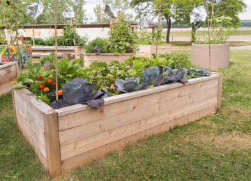 raised-garden-bed.jpg