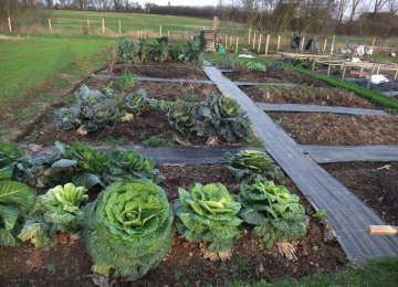 allotment-photo.jpg