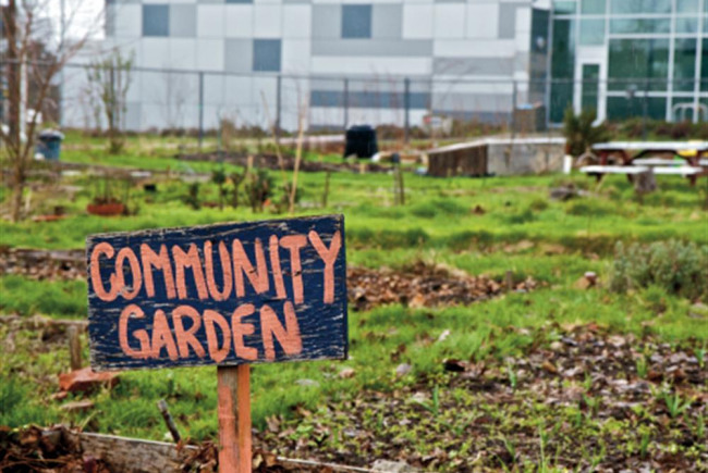 Community Garden on Boleyn Road