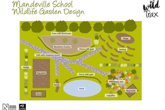 The Mandeville School Wildlife Garden
