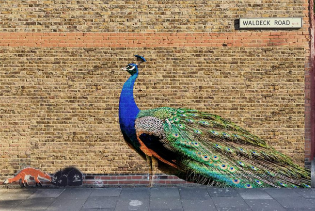 Pride and the Peacock