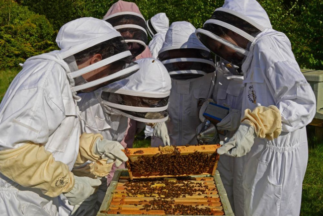 Bee Workers to Key Workers